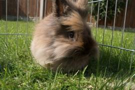our pet rabbit